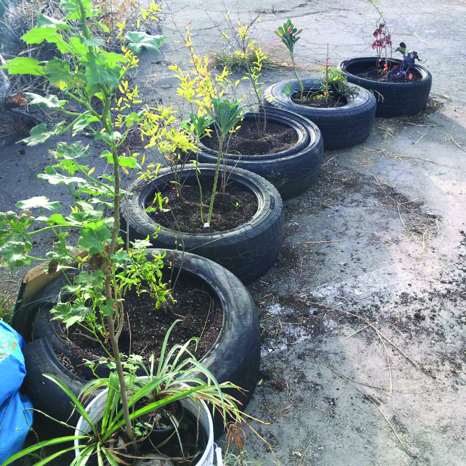 Old tires are used as planters to form a community garden.