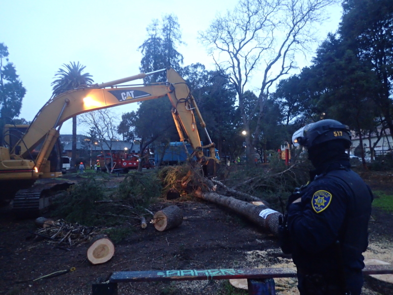Trees in People's Park being cut down while a UC police officer looks on.