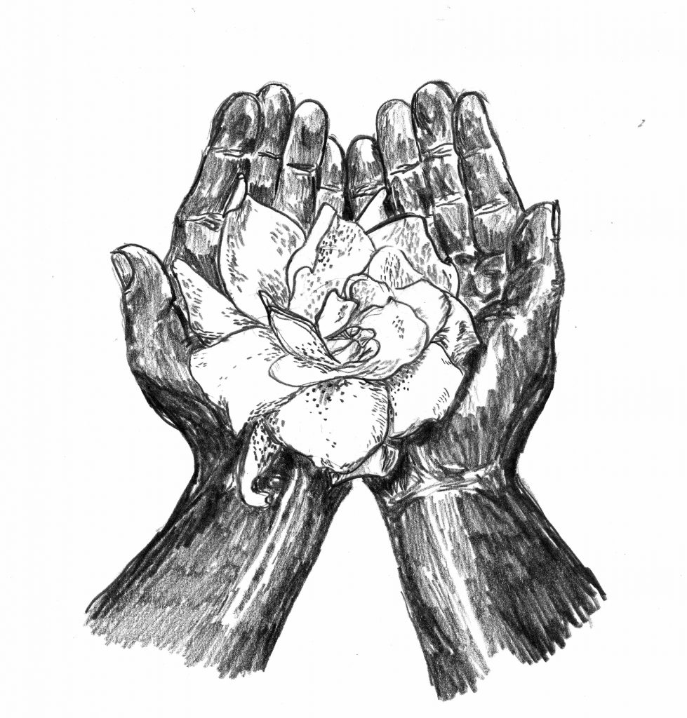 A pencil drawing of two hands holding a flower