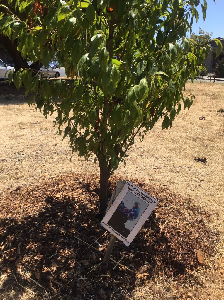 A fruit tree and a small laminated placard containing a photo and the name of a community member who has passed.