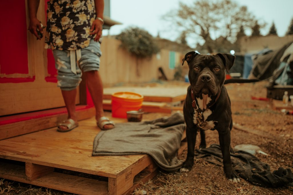 A pit-bull mix stares at the camera. Behind him, a woman stands on the porch of a pink tiny home. Only her legs and feet can be seen.