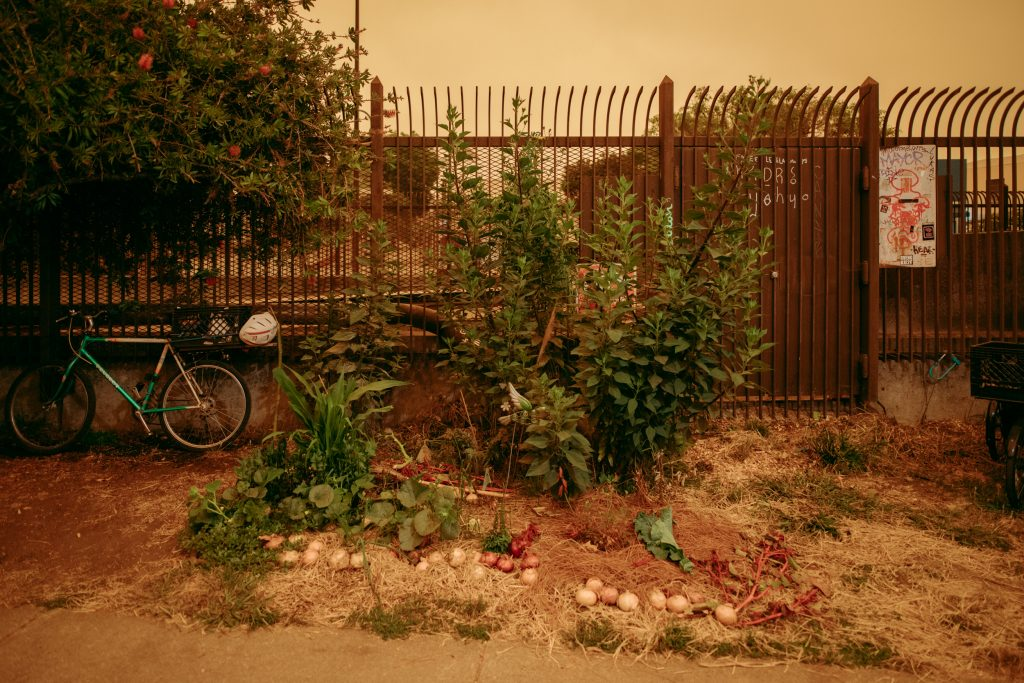 In front of a fence there is a garden. Onions can be seen growing in the ground, and behind them, tall vegetable stocks grow. A bike leans up against the fence.