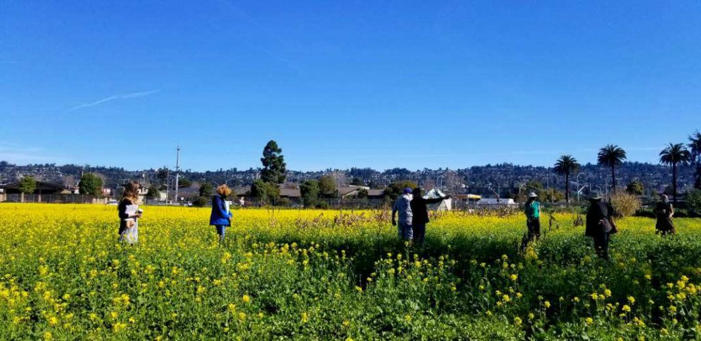 People stand in a field that is thick with yellow mustard flowers. The sky is blue above them.