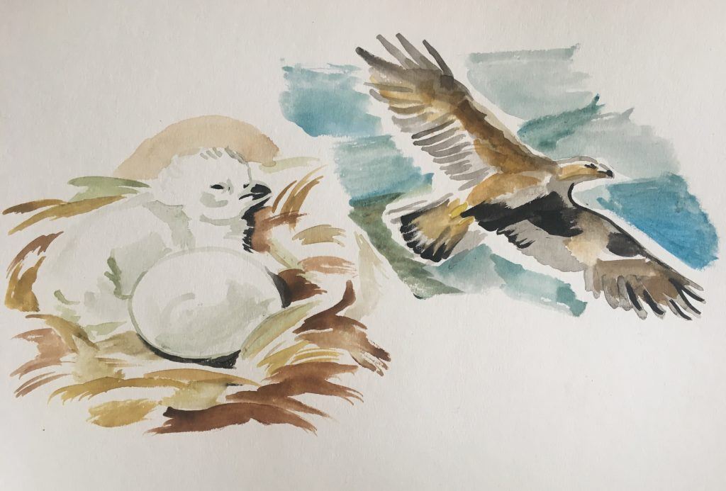 A watercolor image of a baby bird in a nest. In the background, a fully grown bird flies in the sky.
